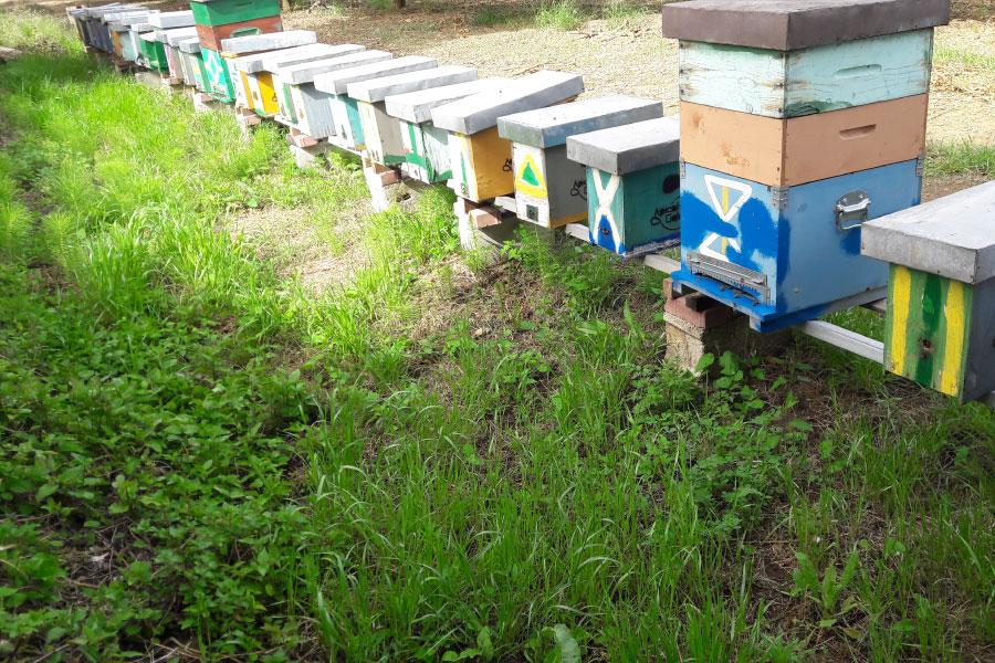 Allevamento nuclei di api Calabria