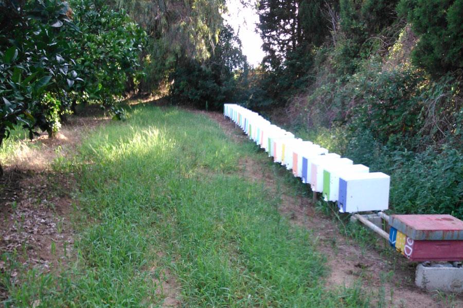 Nuclei di api Calabria