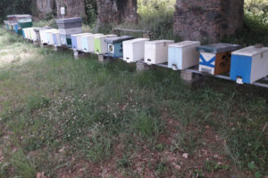 Produzione sciami Calabria