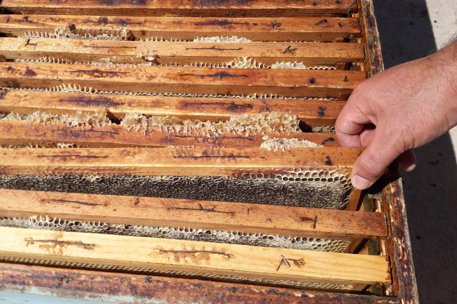 Produzione e vendita miele in Calabria