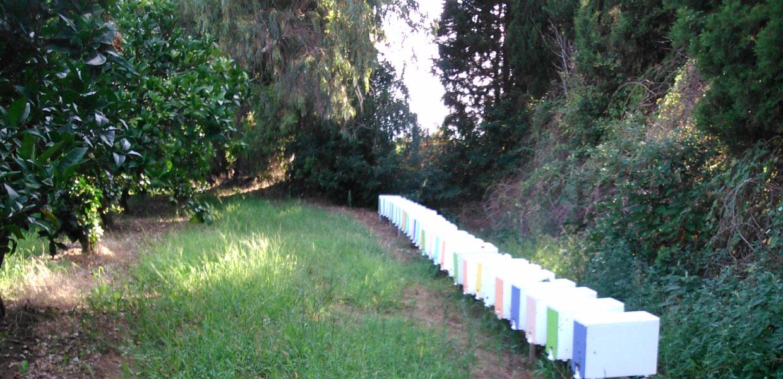 Calabria, allevamento nuclei di api